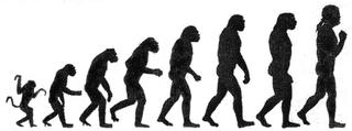 Ilustraciones como esta, aunque muy populares, transmiten una visión errónea de la evolución humana. Imagen de Wikipedia.