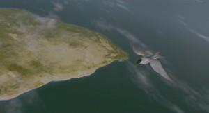 Imagen digital del documental 'Winged Migration' (2001) mostrando un charrán ártico volando sobre África. Imagen de Columbia-Tristar.