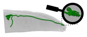 Ilustración de la 'antena magnética' descubierta en el gusano 'C. elegans'. Imagen de Andrés Vidal-Gadea.
