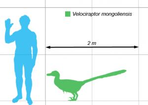 Escala de tamaño del velocirraptor. Imagen de Matt Martyniuk / Wikipedia.