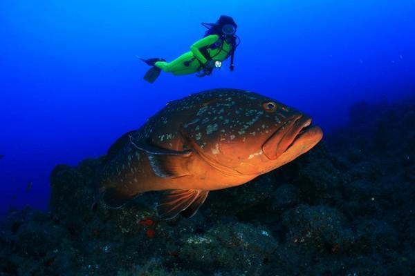 Muere pancho el pez m s famoso de canarias la cr nica verde - Fotos de peces del mediterraneo ...