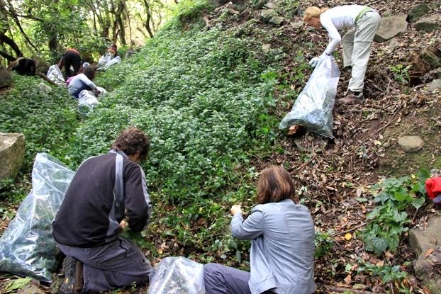 Tradescantia la cr nica verde for Viveros de plantas en concepcion
