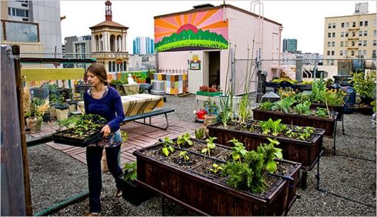 Nuevo negocio huertos en las azoteas la cr nica verde for Casa y jardin tienda madrid
