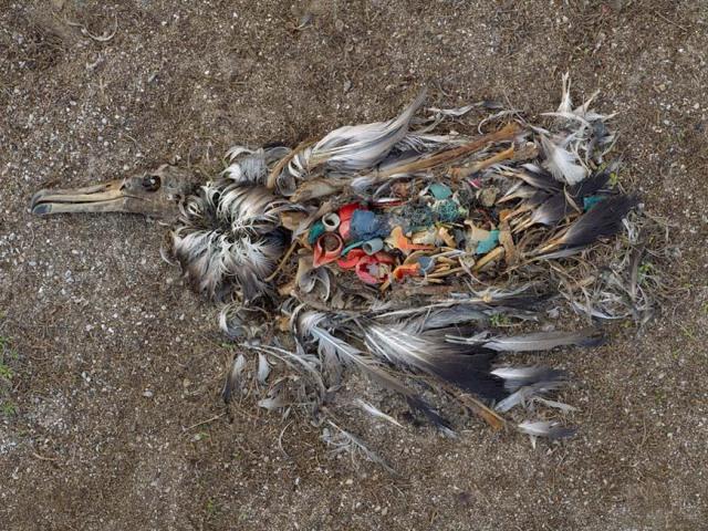 Un vídeo sobre la contaminación marina y los albatros incendia ...