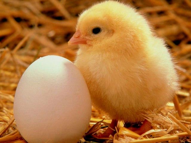 Huevos | La crónica verde