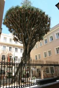 Drago Cádiz
