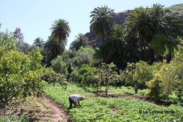 Huerta canaria