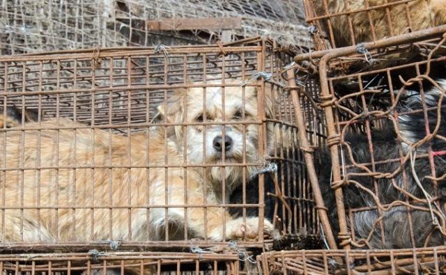 Perros en matadero