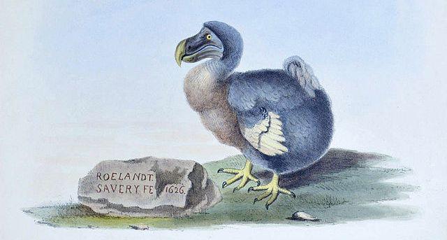 Una de cada ocho especies de aves del planeta están en peligro de ...