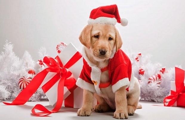 Dog-Christmas-gift