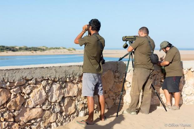 ornitologos