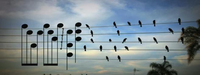 birdswire-660x250