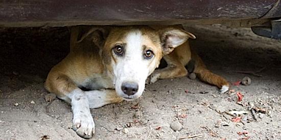 perro_abandonado-Avaaz_550