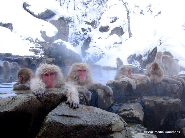 Jigokudani_hotspring_in_Nagano_Japan_001