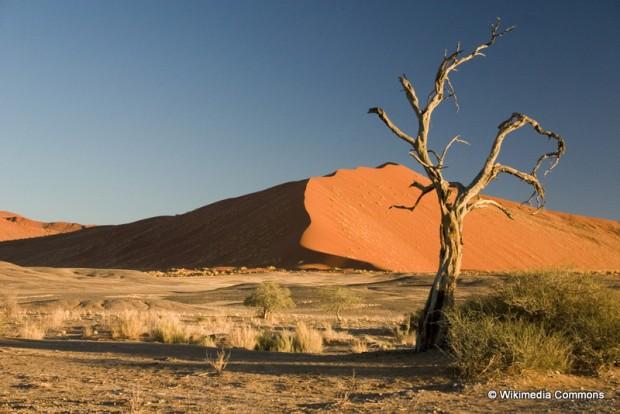 Thorn_Tree_Sossusvlei_Namib_Desert_Namibia_Luca_Galuzzi_2004