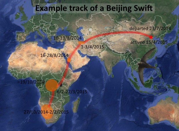 beijing-swift1