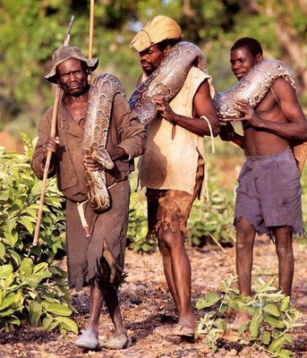 Cazando Serpientes Pitón Con El Pie