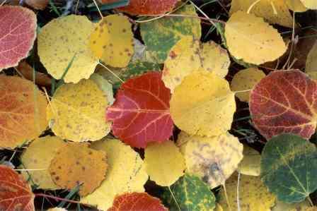 El jard n del instituto por qu se caen las hojas de los for Como se llaman los arboles que no pierden sus hojas