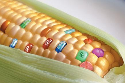 Los alimentos transgénicos no son un peligro futuro. Son una amenaza