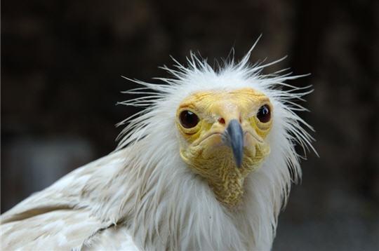 vautour-257198.jpg