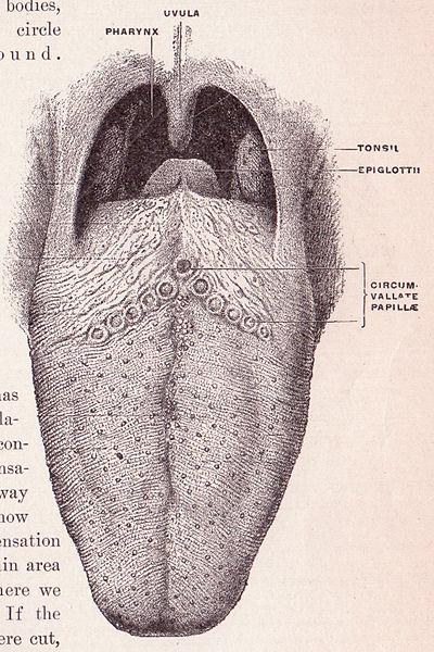 La lengua_wikimedia