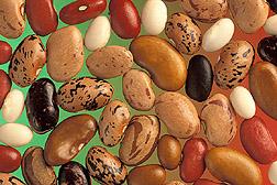 Phaseolus_vulgaris_seed
