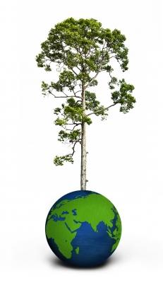 Planeta árbol