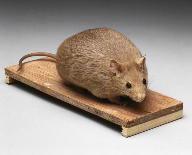 Dieta el nutricionista de la general - Como evitar los ratones ...