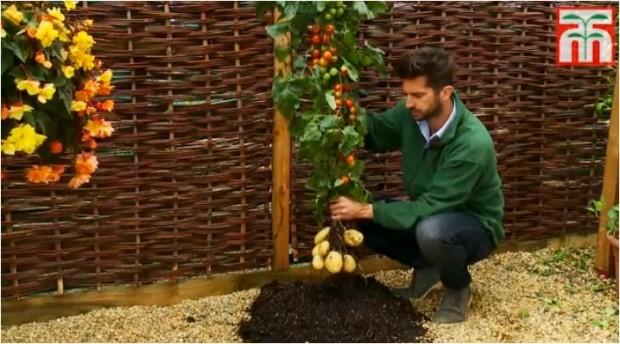 Patata-tomate