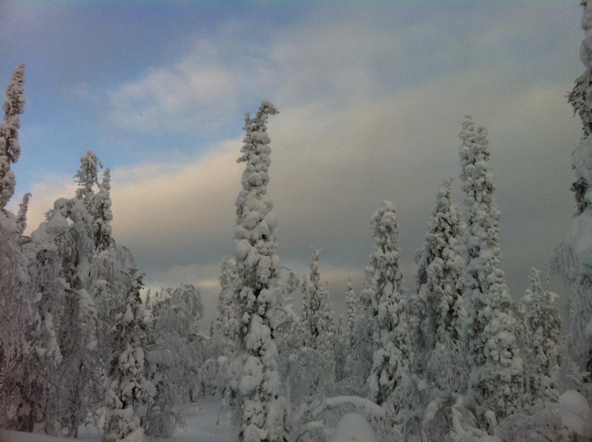 Ayer en nuestra excursión a Inari y sus lagos.