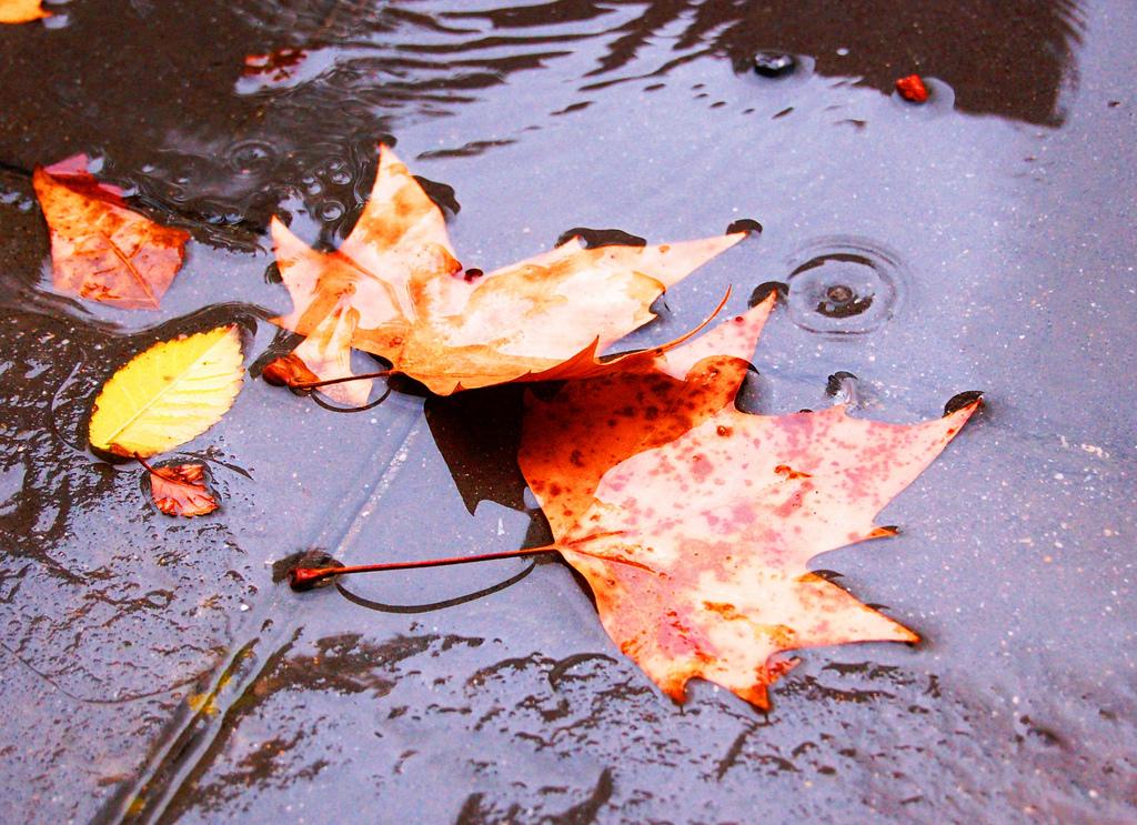 Con el otoño nuestro cuerpo se resiente, pero se respira mejor. Foto Mafueri CC/Flickr