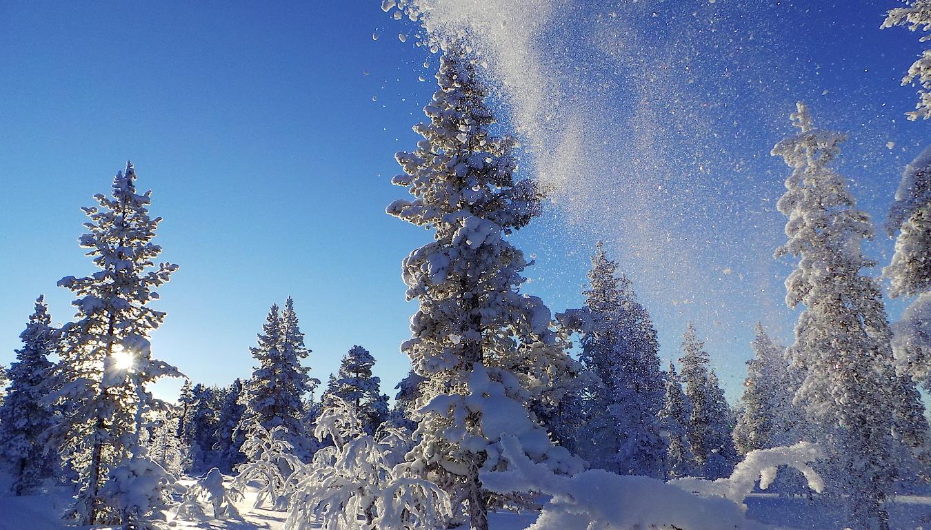 Copos sueltos lanzados al aire, nieve polvo en el parque Urho Kekkonen. Foto ER.