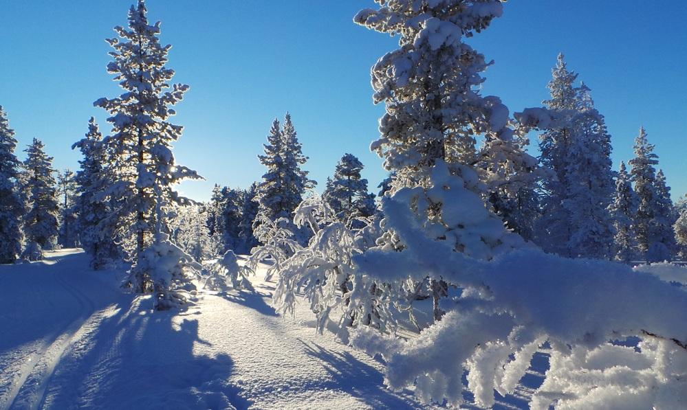Cielos azules y frío en el parque Urho Kekkonen. Foto ER.