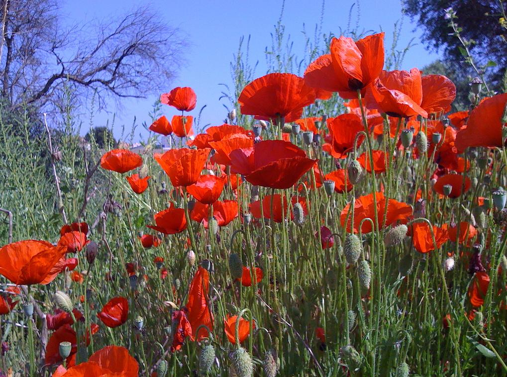 "Parece que el miércoles 10 de Abril entra ""esta"" primavera. Foto JC I Núria Flickr CC."