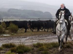El ministro Arias Cañete, asistiendo a salida del ganado trashumante en un pueblo de Ávila. (EFE)