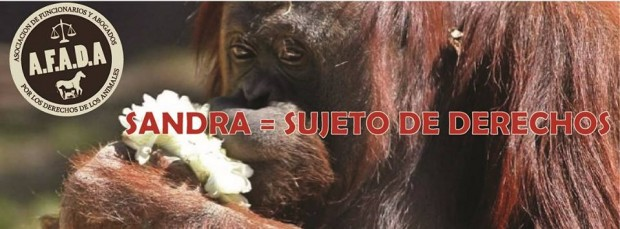 Sandra, la orangutana. Facebook AFADA.