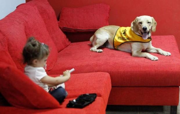 Una niña de dos años con diabetes jugando con un glucómetro junto a un perro de asistencia.