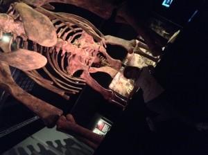 Julia bajo el diplodocus.