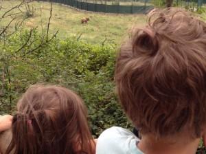 Jaime y Julia observando a Furaco en su cercado.