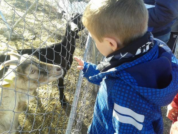 Jaime y las cabras respiro familiar y ocio para ni os con autismo madre reciente - Animales con personas apareandose ...