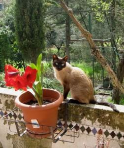 Pilo, en sus buenos tiempos, posando junto a un amarilis rojo.