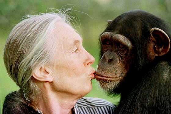 Jane Goodall con un chimpancé (Archivo)
