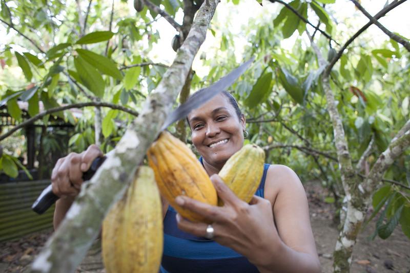 Maribel Villar cosechando frutos de cacao en República Dominicana. Foto: Guadalupe de la Vallina