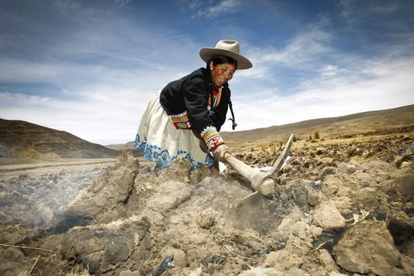 Virginia cultivando en su parcela en los Andes de Perú. (c) Percy Ramírez / Oxfam