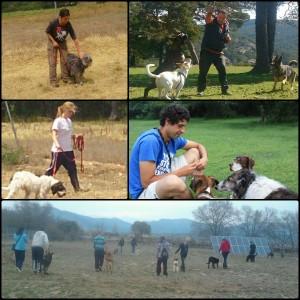 Miembros de FENIXCAN con perros de acogida. Imagenes cedida por Fenixcan