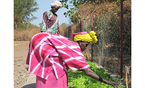 Una mujer trabaja la tierra en Guinea Bissau. Imagen: Alianza por la Solidaridad.