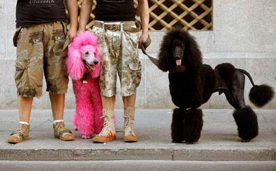 ... from flavor of love viendo zoo fotos y videos de zoo zoofilia total