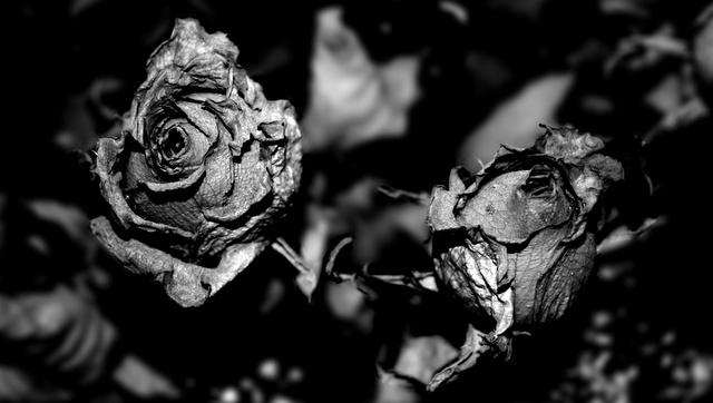 rosas23gm