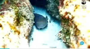 El peligrosísimo tiburón (TELECINCO).