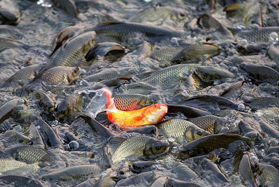 Las mejores fotos de agosto y septiembre sexta columna for Comida peces estanque